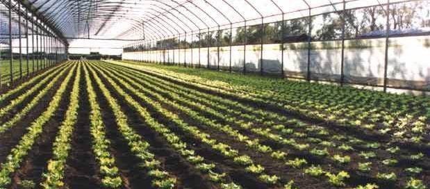 la-coltura-agricola-siciliana