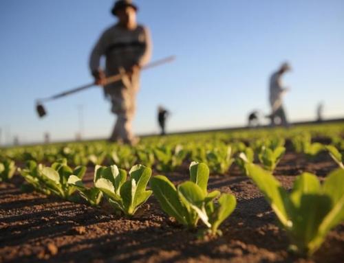 Perché incrementare le politiche di marketing nel settore agricolo