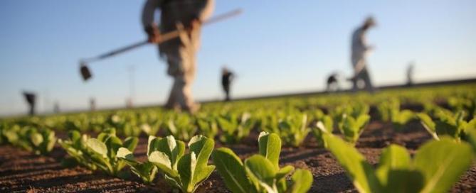 marketing-e-agricoltura